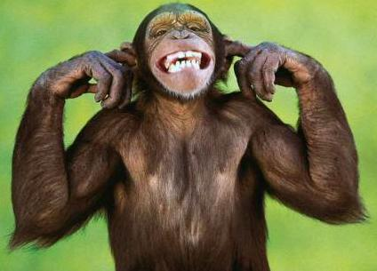Mono simpático.