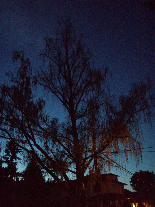 Twilight in McMinnville, Oregon
