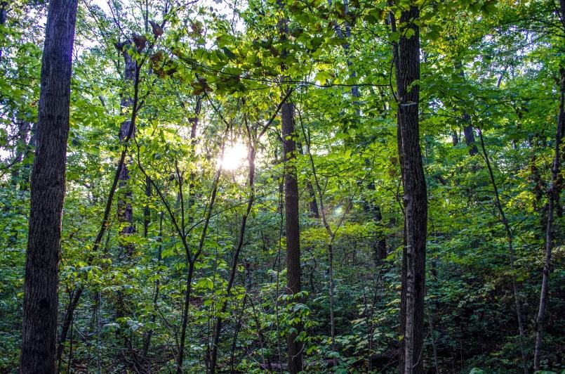 Trees at the Stillwater Prairie Preserve